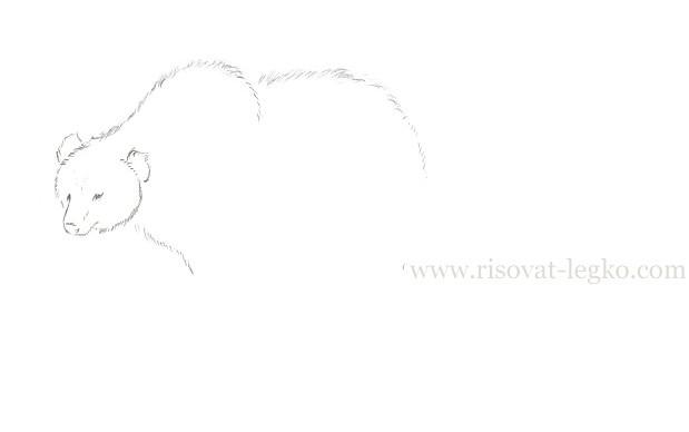 04.Как нарисовать медведя карандашом поэтапно