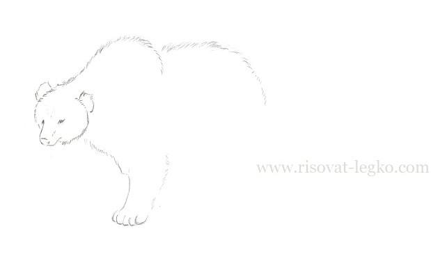 05.Как нарисовать медведя карандашом поэтапно