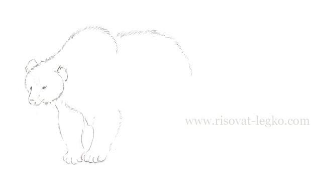 06.Как нарисовать медведя карандашом поэтапно