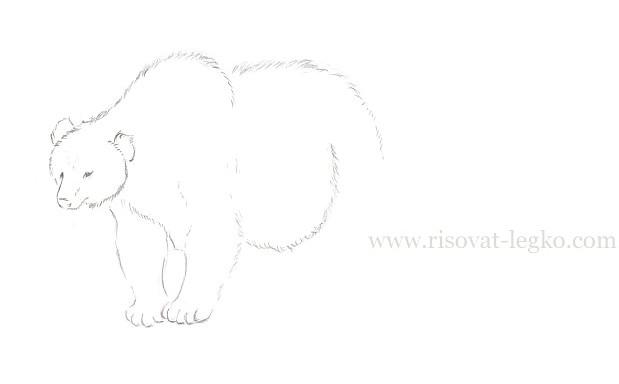 07.Как нарисовать медведя карандашом поэтапно