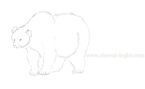 08.Как нарисовать медведя карандашом поэтапно