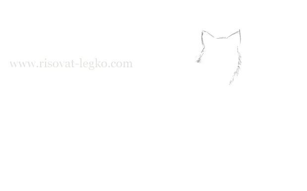 02.Как нарисовать волка поэтапно карандашом