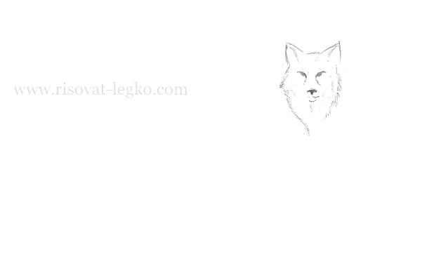 03.Как нарисовать волка поэтапно карандашом