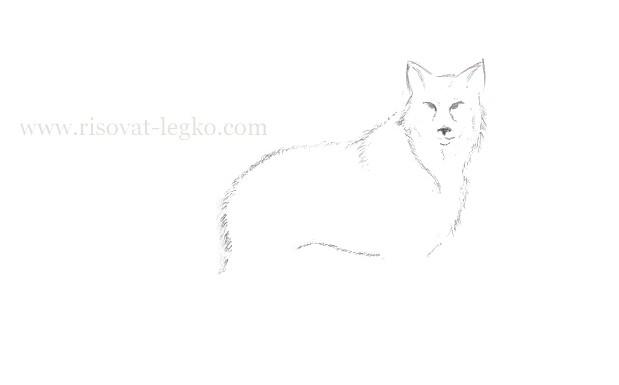 05.Как нарисовать волка поэтапно карандашом