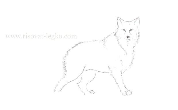 07.Как нарисовать волка поэтапно карандашом