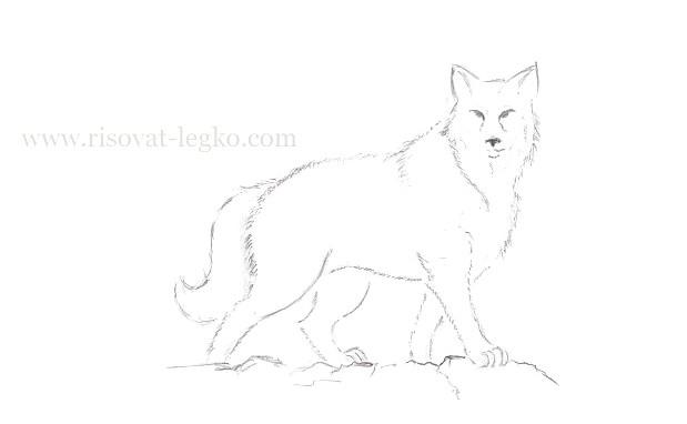 09.Как нарисовать волка поэтапно карандашом