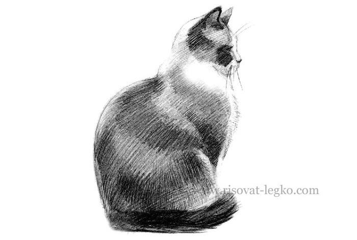07.Как нарисовать кошку карандашом поэтапно