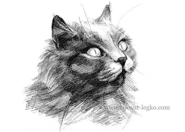 01.Как нарисовать кота карандашом поэтапно