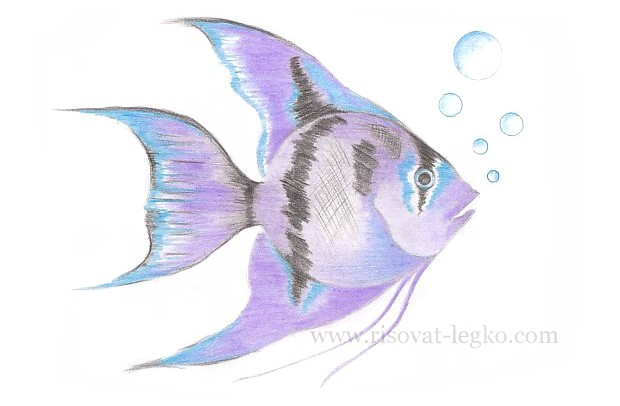 01.Как нарисовать рыбку красиво поэтапно карандашом