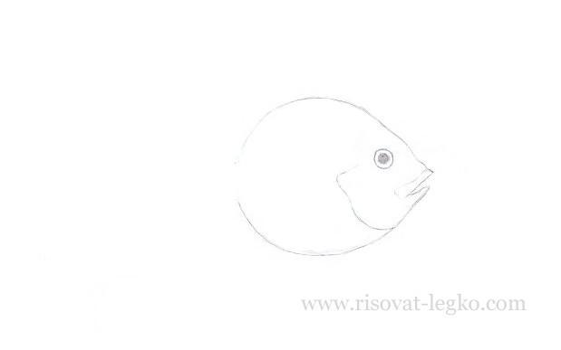 03.Как нарисовать рыбку красиво поэтапно карандашом