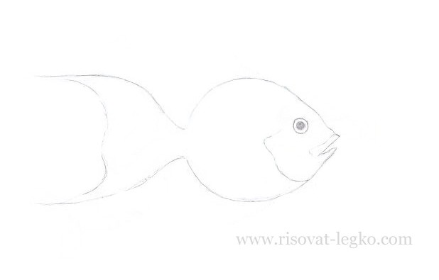 04.Как нарисовать рыбку красиво поэтапно карандашом