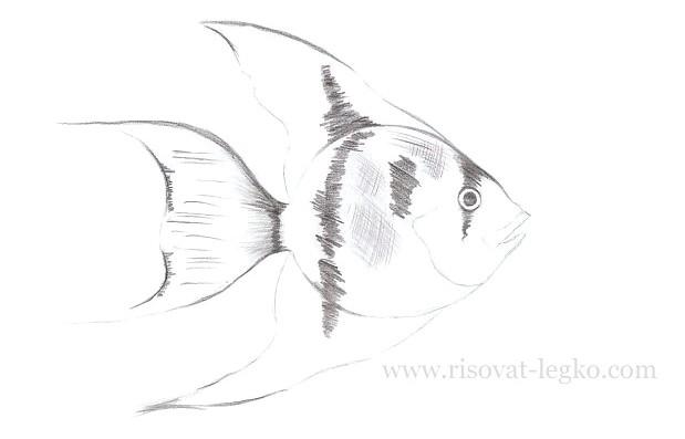 06.Как нарисовать рыбку красиво поэтапно карандашом