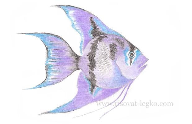 08.Как нарисовать рыбку красиво поэтапно карандашом