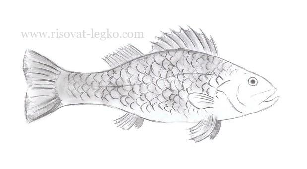 01.Как нарисовать рыбу карандашом поэтапно