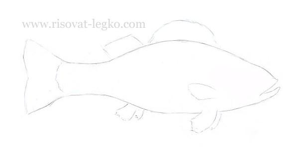 04.Как нарисовать рыбу карандашом поэтапно