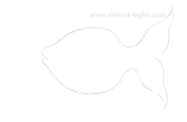 03.Как нарисовать золотую рыбку поэтапно карандашом