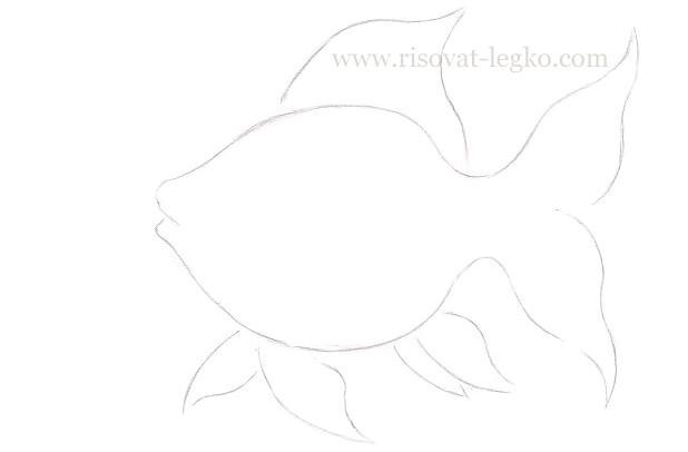 04.Как нарисовать золотую рыбку поэтапно карандашом