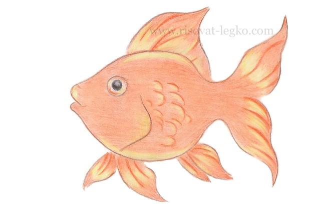 06.Как нарисовать золотую рыбку поэтапно карандашом