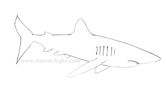 04.Как нарисовать акулу карандашом поэтапно