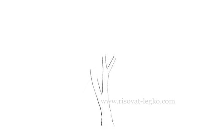 04.Нарисовать дерево поэтапно карандашом