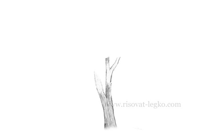 05.Нарисовать дерево поэтапно карандашом