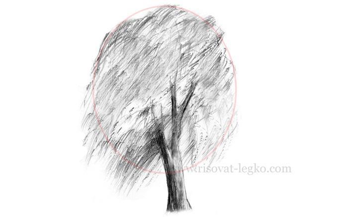 08.Нарисовать дерево поэтапно карандашом