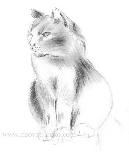 10.Как нарисовать кошку поэтапно карандашом красиво