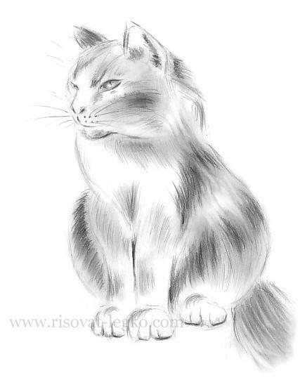 11.Как нарисовать кошку поэтапно карандашом красиво