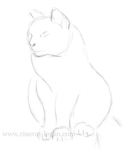 07.Как нарисовать кошку поэтапно карандашом красиво