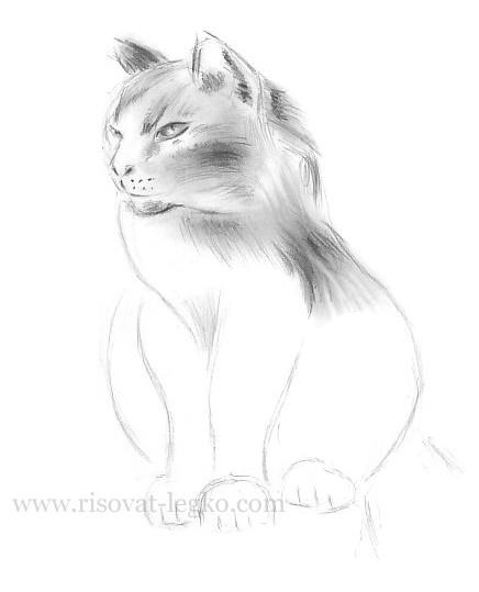 09.Как нарисовать кошку поэтапно карандашом красиво