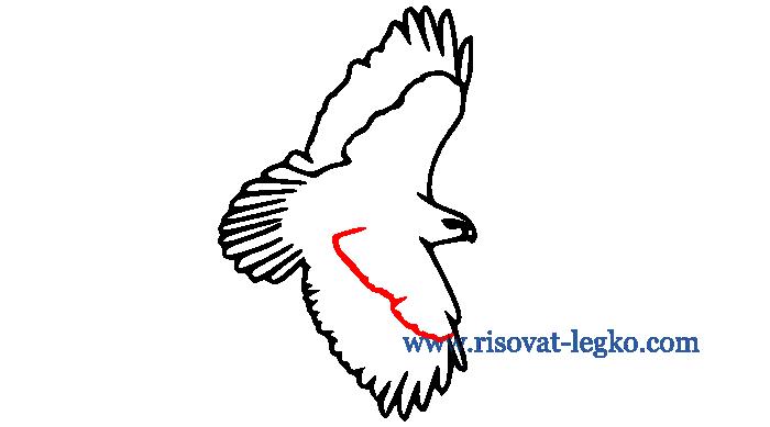 08.Как нарисовать птицу поэтапно карандашом легко