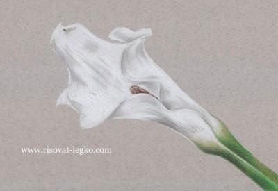 01.Как нарисовать цветы карандашом поэтапно