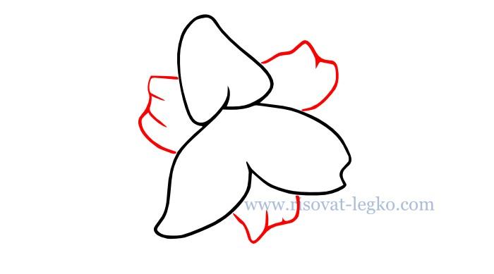 03.Цветы карандашом поэтапно: учимся рисовать цветы
