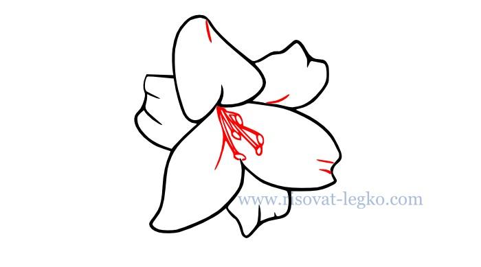 04.Цветы карандашом поэтапно: учимся рисовать цветы