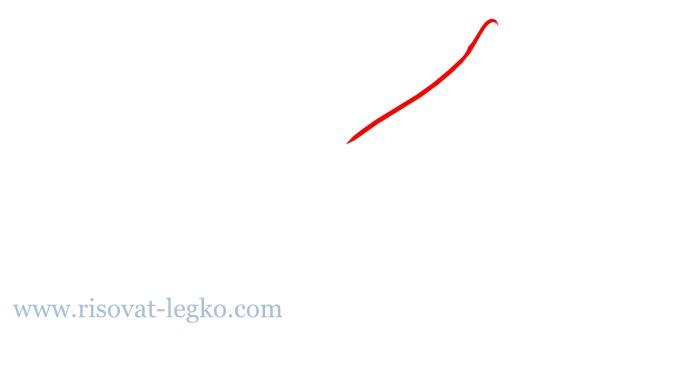 05.Цветы карандашом поэтапно: учимся рисовать цветы