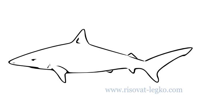 01.Как нарисовать акулу поэтапно для начинающих