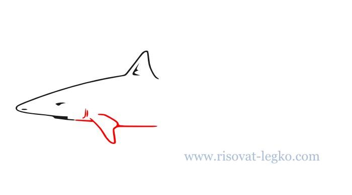 04.Как нарисовать акулу поэтапно для начинающих