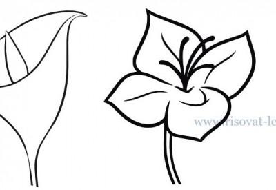 01.Как нарисовать цветы поэтапно для начинающих
