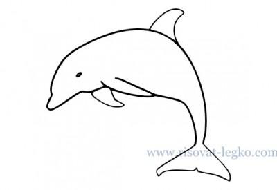 01.Как нарисовать дельфина поэтапно для начинающих