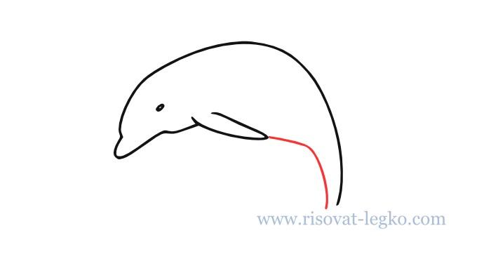 05.Как нарисовать дельфина поэтапно для начинающих