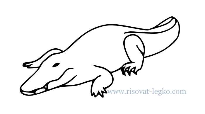 01.Как нарисовать крокодила поэтапно для начинающих