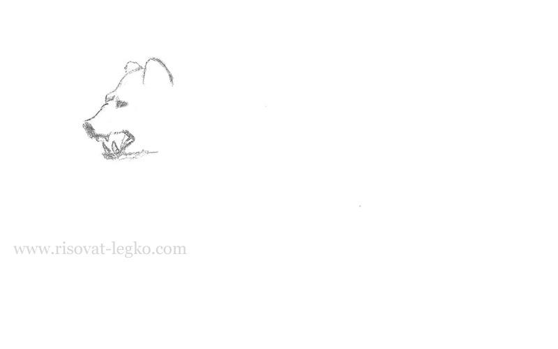 03.Как нарисовать медведя карандашом