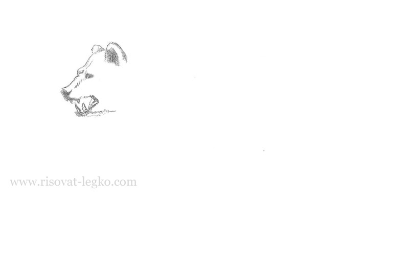 04.Как нарисовать медведя карандашом