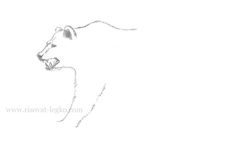 05.Как нарисовать медведя карандашом