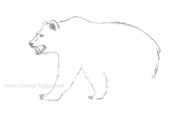 06.Как нарисовать медведя карандашом