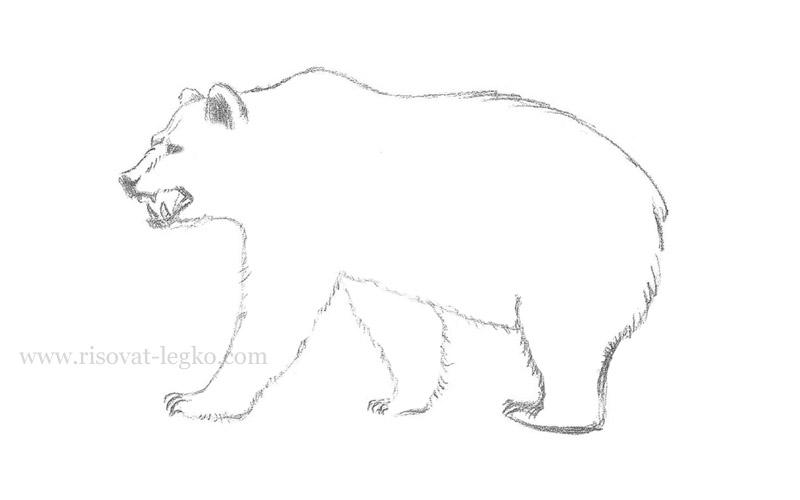 07.Как нарисовать медведя карандашом