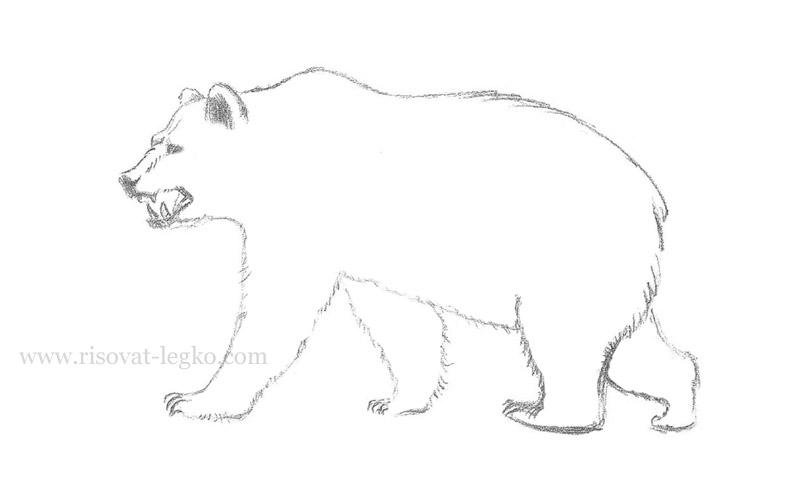 08.Как нарисовать медведя карандашом