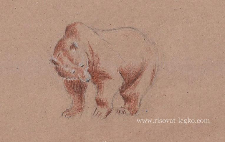 07.Как нарисовать медведя поэтапно карандашом