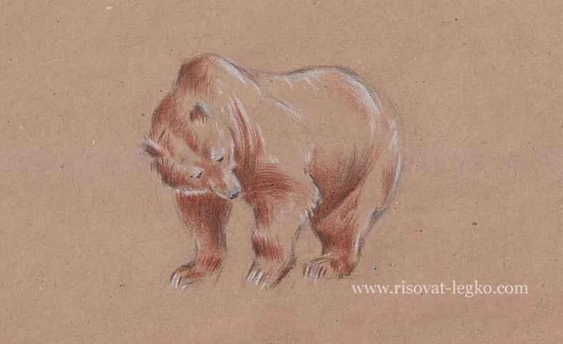 08.Как нарисовать медведя поэтапно карандашом