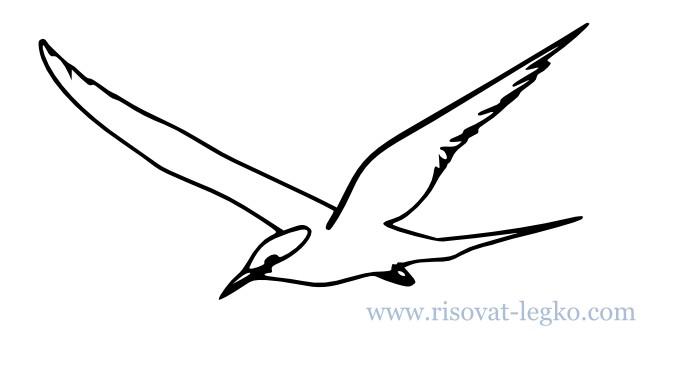 01.Как нарисовать поэтапно карандашом птицу новичку